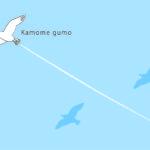 ポストカード(kamomegumo)